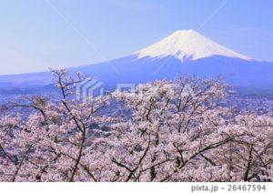 桜と富士2